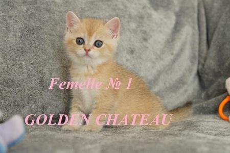 Chatterie Golden Château