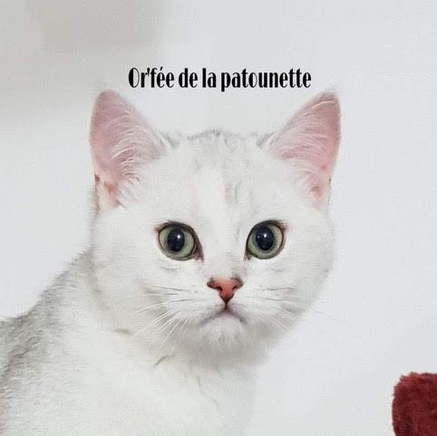 Chatterie de la Patounette