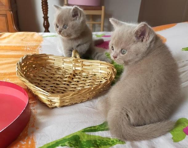 Chatterie du Cat Car