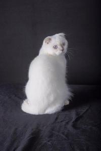 Luzie Love de la Patte Feline